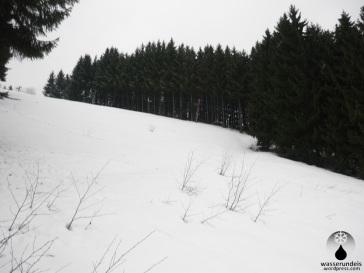 Oberer Abschnitt der Skipiste am Hillekopf. Teilweise breitet sich bereits Buschwerk aus,