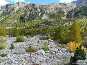 Herbst Gletschervorfeld Schweiz