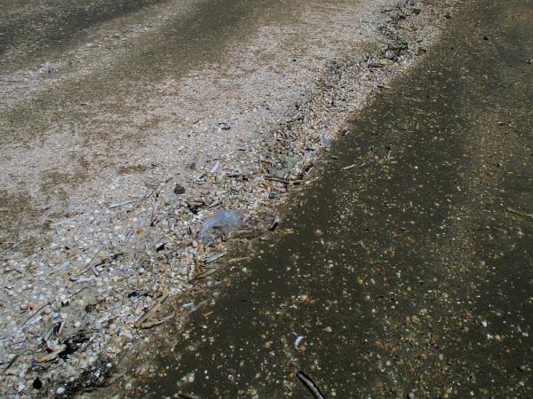 Müll Plastikmüll Fanø Nordsee