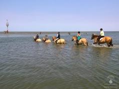 #Duhner Loch Pferde