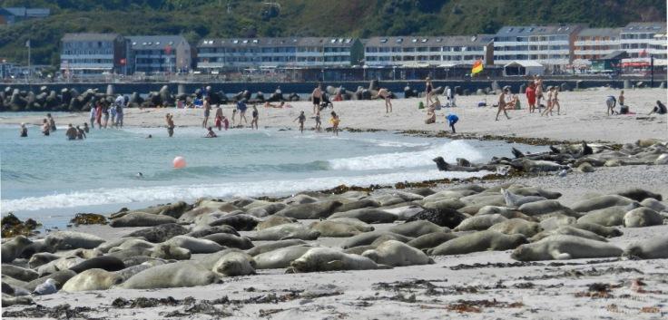 #Südstrand Düne Robbenkolonie