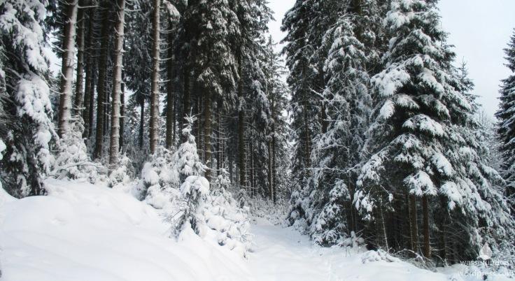 2017-12_LandalWinterberg00