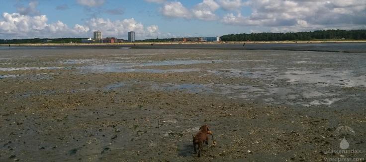#Sahlenburger Strand Niedrigwasser