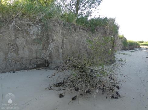 Uferabbrüche an der Kleinensieler Plate.