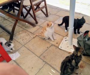 Streunende Katzen in Gaios auf Paxos