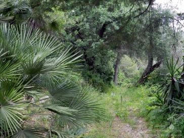 Mediterane Vegetation auf Korfu.