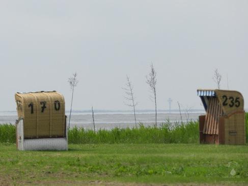 Strandkörbe auf dem Grünstrand vor dem Wattenmeer.