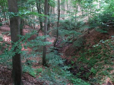 """Wildbach""""schlucht"""" auf dem Weg zum Möhneseeturm."""