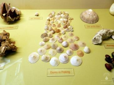 Mehr oder weniger humorvoll arrangierte Muschelschalen im Wremer Muschelmuseum.