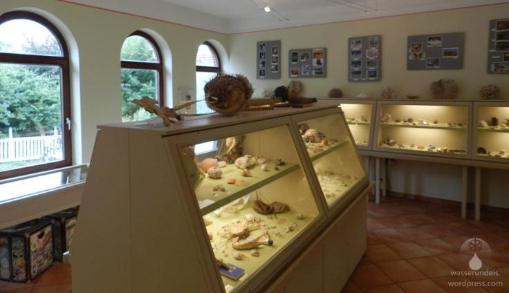 Muschelmuseum Wremen Nordsee