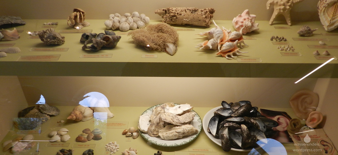 Muschelmuseum Wremen