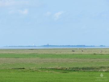 Blick von Deich über die Salzwiesen zur Insel Neuwerk.