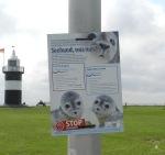 #Wremen Seehund gefunden