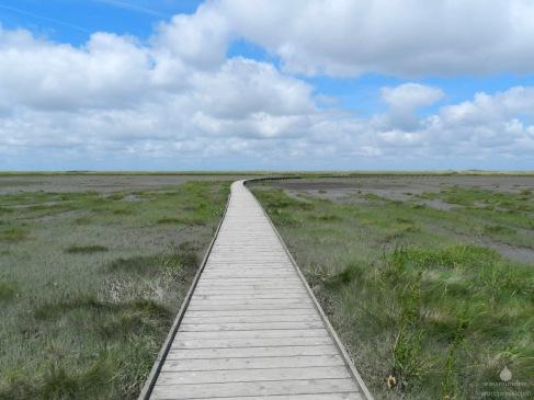 Bohlenweg durch die Salzwiesen im Langwarder Groden.