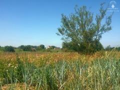 Weite Wiesen im Deichvorland bei Käseburg.