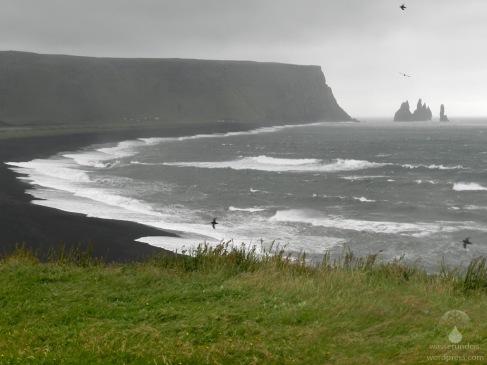 Der Strand Reynisfjara und die Felsnadeln Reynisdrangar. Davor anfliegende Papageientaucher.
