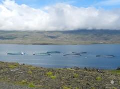Eine Aquakultur für Lachse im Beruffjord