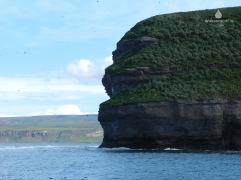 An den Klippen der winzigen Insel Lundey wimmelt es von Papageientauchern.