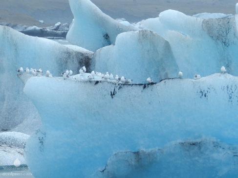 Möwen auf einem Eisberg im Jökulsárlon.