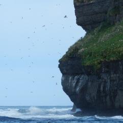 An den Klippen der Felseninsel geht es zu wie in einem Mückenschwarm.