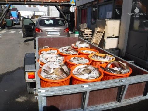 Die überreste filetierter Fische warten auf den Abtransport.