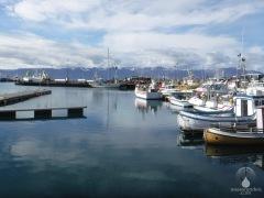 Der Hafen von Husavik.