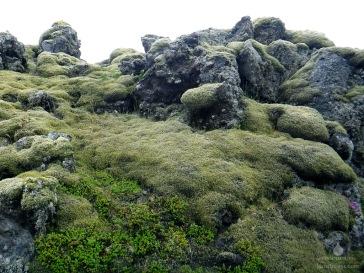 Im Eldhraun ist die Lava zu bizarren Formationen erstarrt.