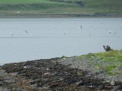 Die Seeschwalben hielten uns davon ab bis zur Spitze der Landzunge zu gehen, die offensichtlich stark von Vögeln aller Art frequentiert wird. Wir nahmen ihre Anwesenheit war und blieben auf Abstand.
