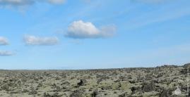 Lavafeld Reykjanes Grindavik