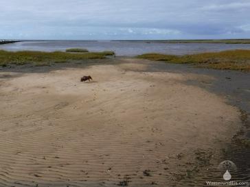 Sandstrand Spieka-Neufeld Nordseeküste