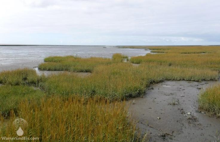 Salzwiesen Wursten Nordsee Spieka
