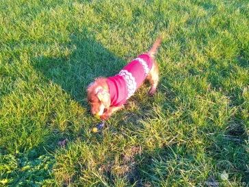 Die Schatten sind lang, selbst bei einem scheinbar kleinen Hund.