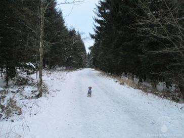 Leicht verschneiter Waldweg.