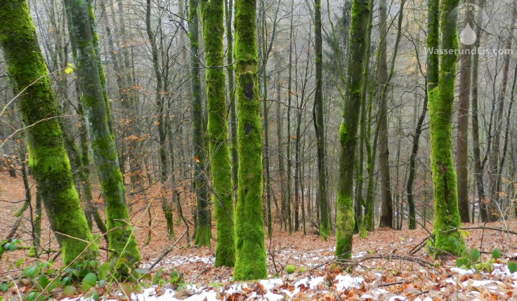 Bäume Moos Winterberg Wanderweg