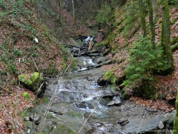 Winterberger Brücken- und Schluchtenpfad.