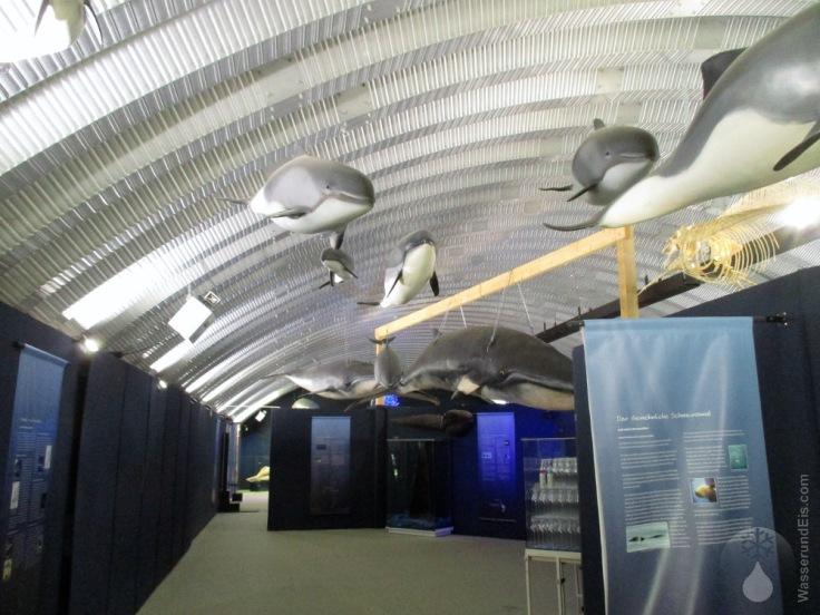 Sonderausstellung die Welt der Wale