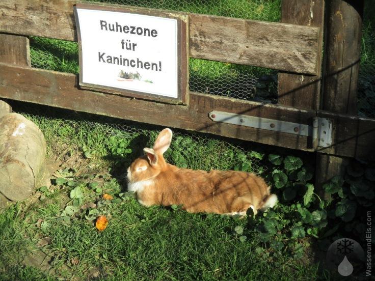 Kaninchen Küstenzoo Natureum