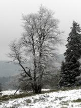 #Winterbaum