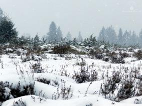 #Winterheide