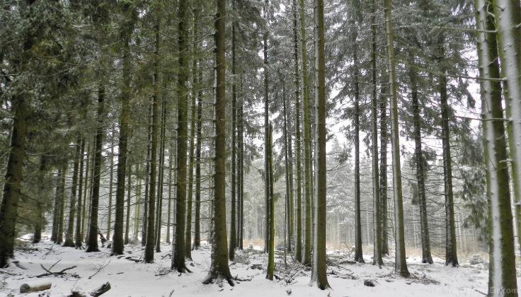 #Winterwald Hochheide