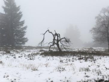 Baum Heide Hochheide