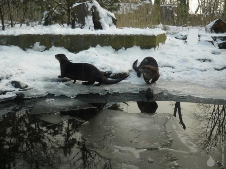 Otter Gelsenkirchen Zoo