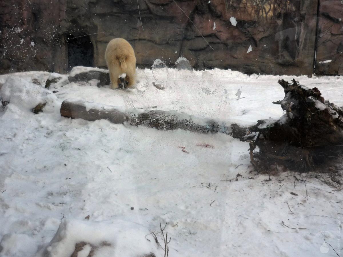 Eisbär Zoom Erlebniswelt Gelsenkirchen