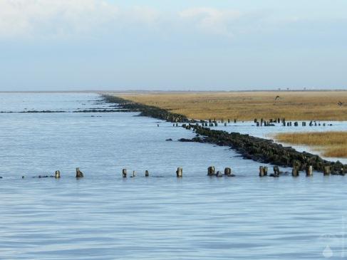Salzwiesen mit Uferbefestigung.