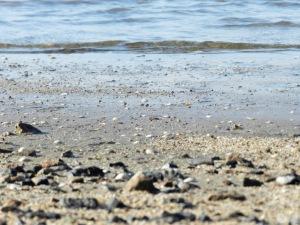Nordseeküste Misselwarden Wremen Solthörn