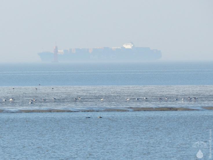 Frachter Containerschiff MSC Weser