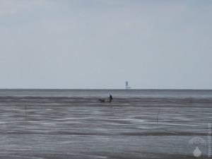 Hundeschlitten im Wattenmeer.