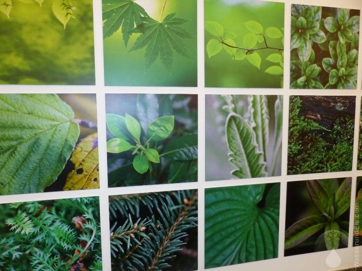 Wandbild Botanika Bremen