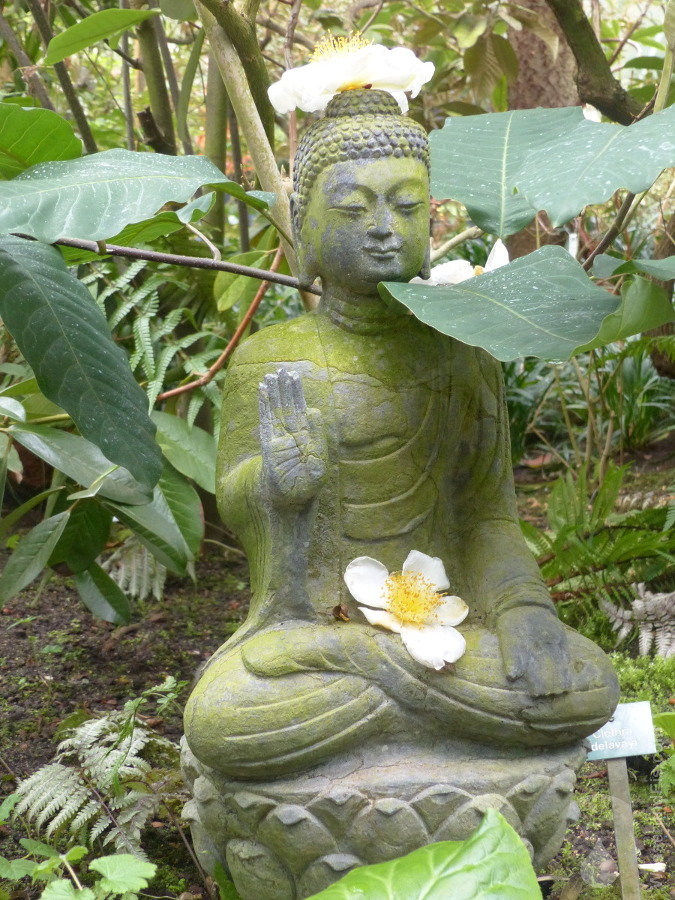 Buddha Botanika Bremen