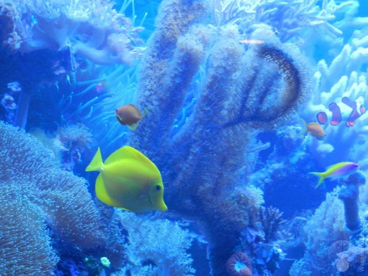 Fische Botanika Bremen